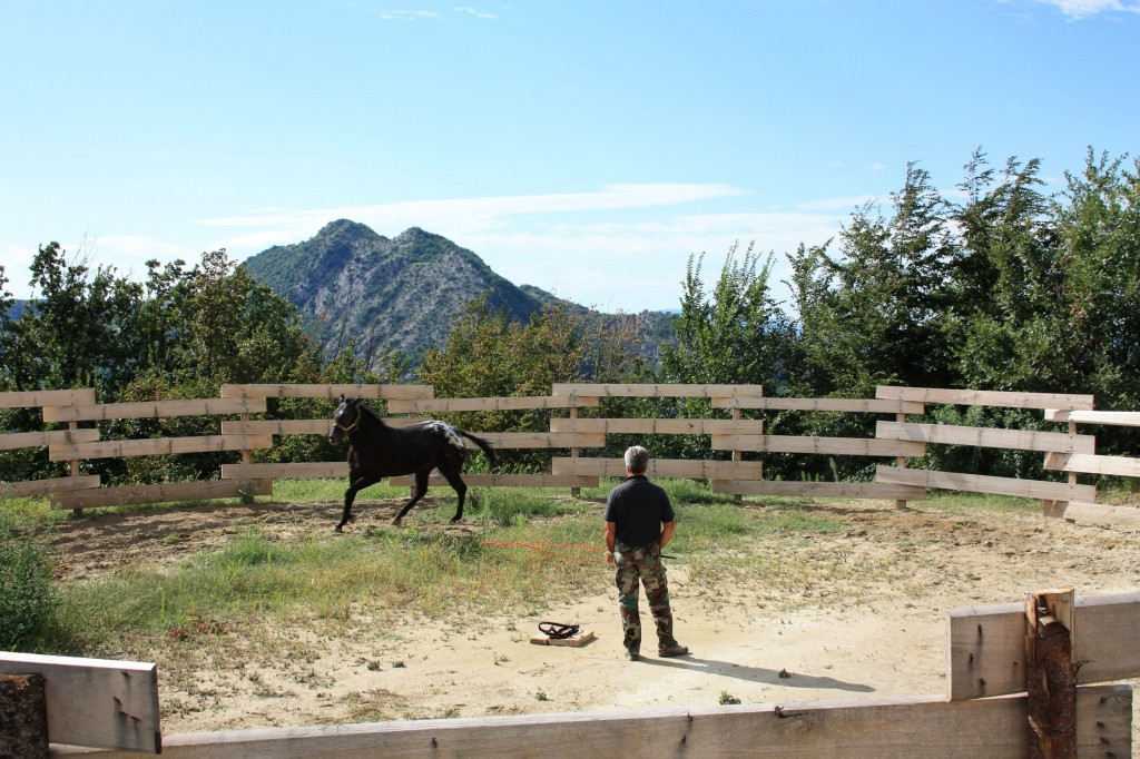 cavalli